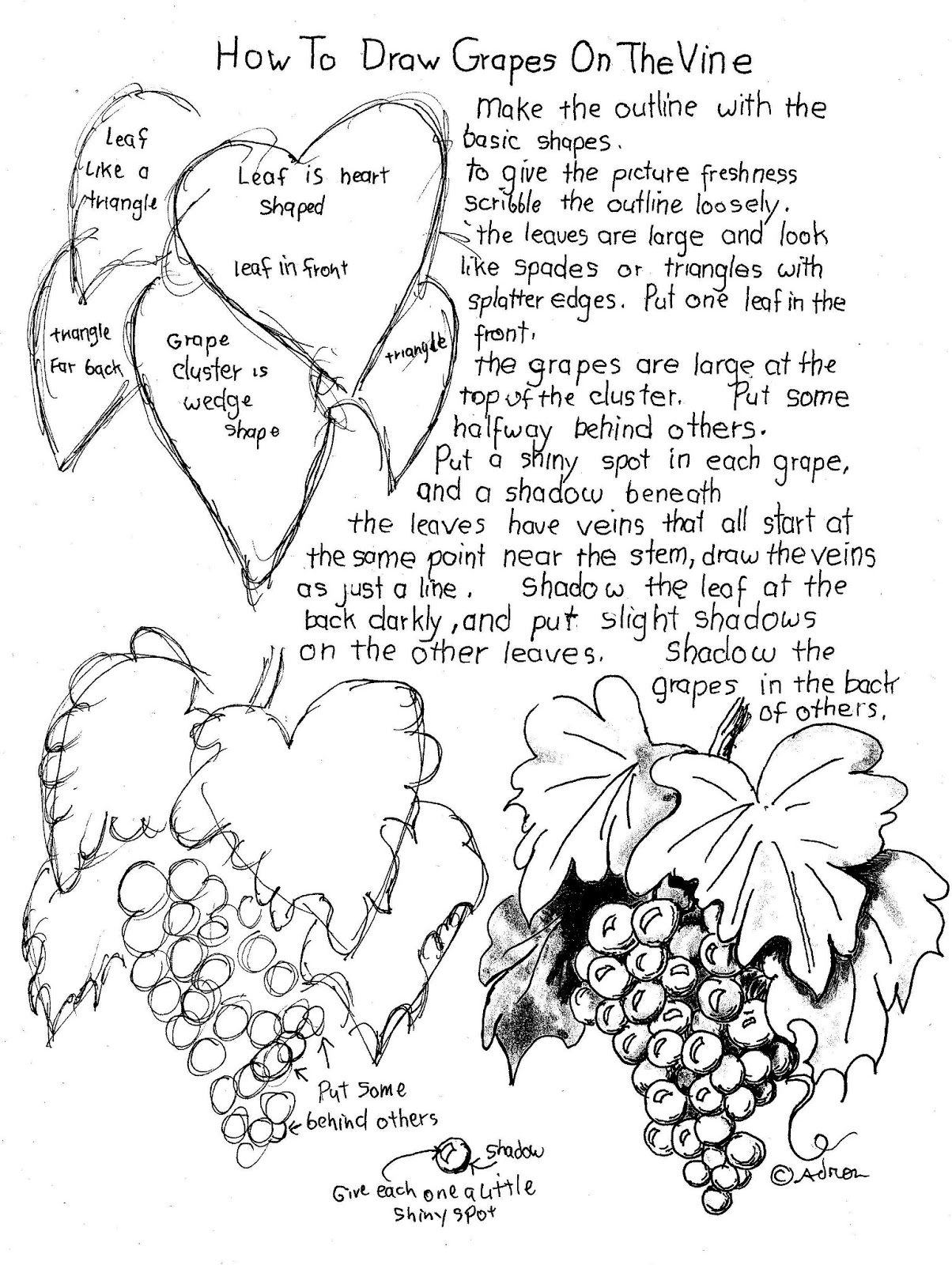 How To Draw Grapes On A Vine Printable Worksheet