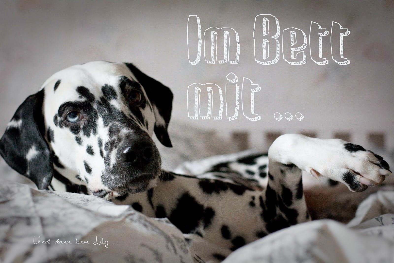 Und Dann Kam Lilly Hundeblog