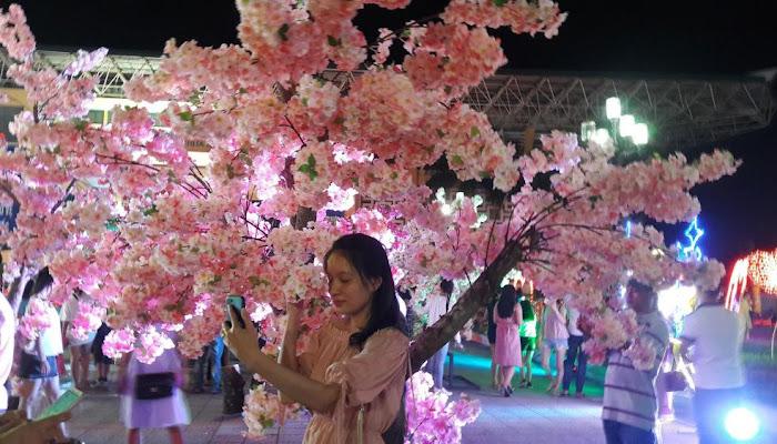Thái Nguyên: Lễ hội hoa anh đào và trình chiếu hiệu ứng ánh sáng nghệ thuật siêu hoành tráng