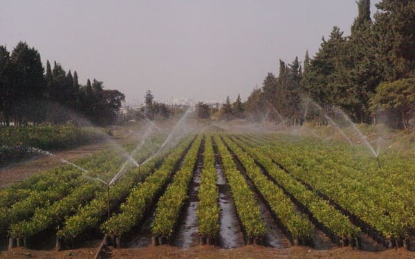 وزارة-الزراعة-تحدد-أسعار-الغراس-المثمرة-لموسم-2018-2019.