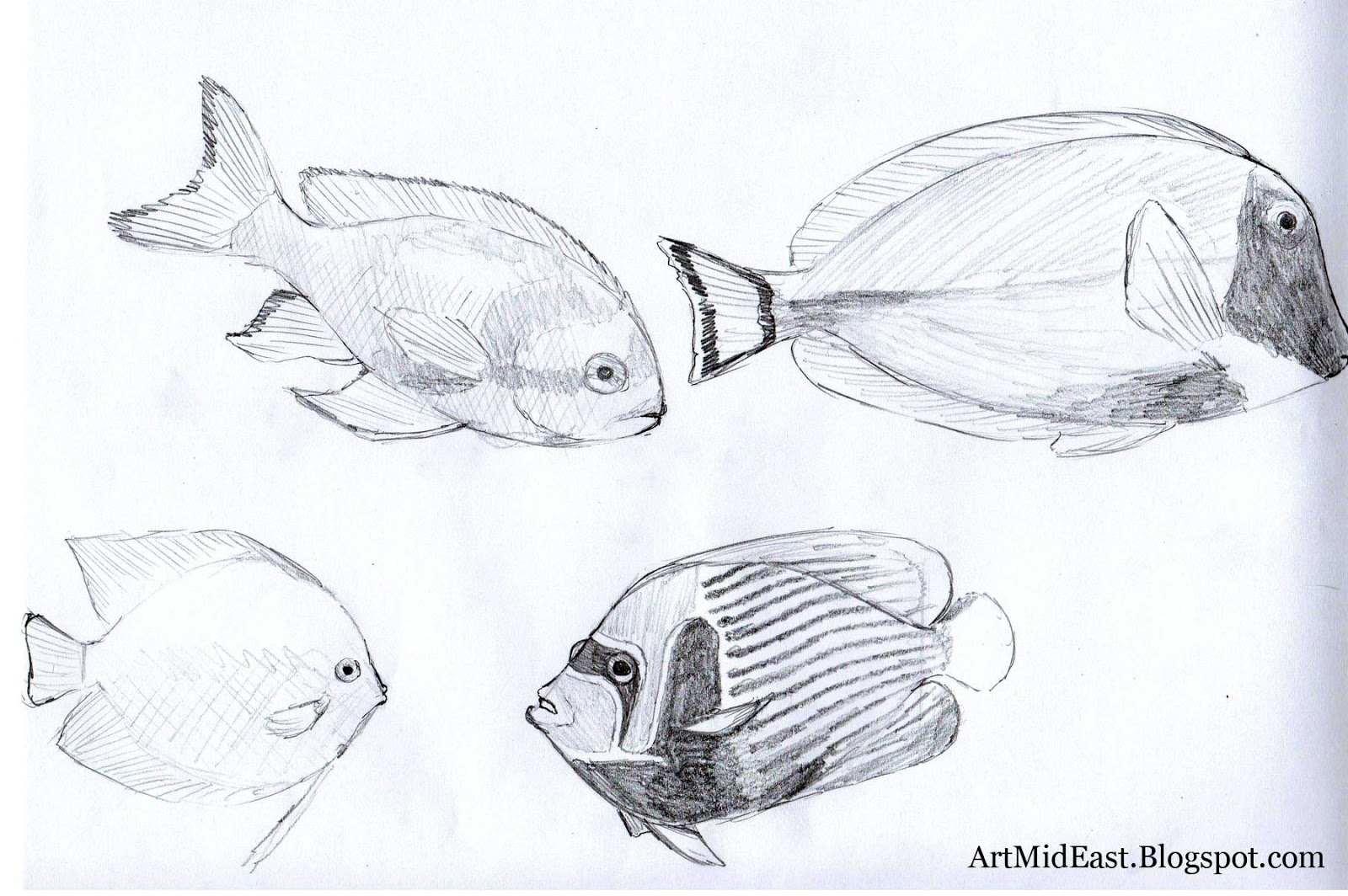 fishes drawing - photo #11