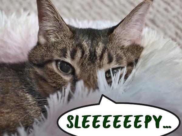 The cat bed caper, part 2