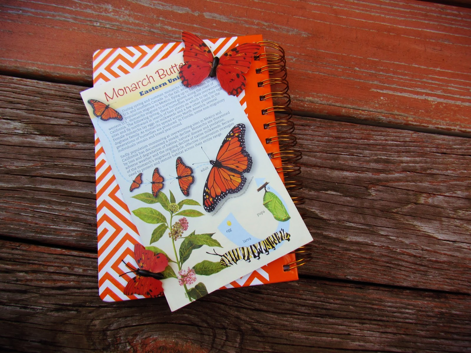 A wooden butterfly flat lay design with monarch butterfly magnets, butterfly guidebook, and an orange chevron business planner in mother nature