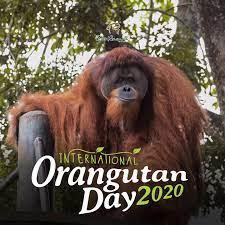 Lain macam zoo bila dibuka semula!