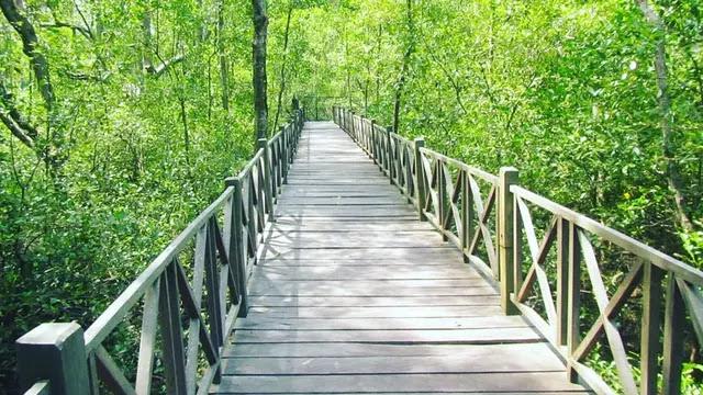 Mangrove Tanjung Penajam Paser Utara