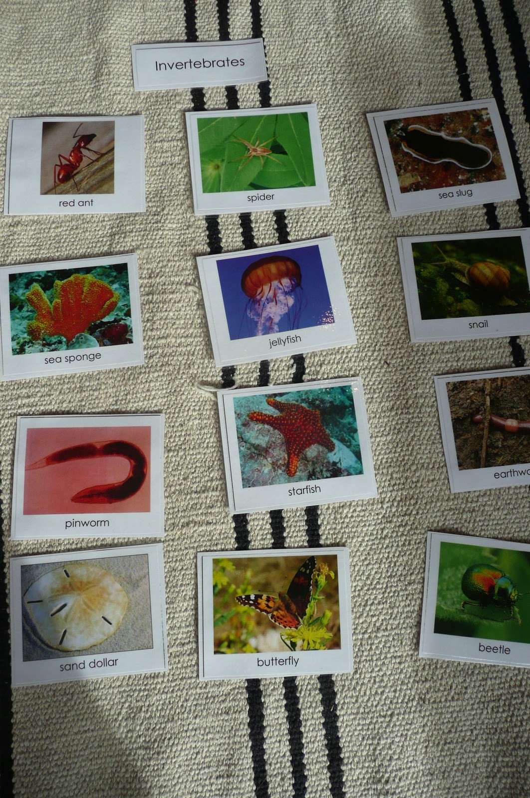 Montessori Teachings Vertebrates And Invertebrates