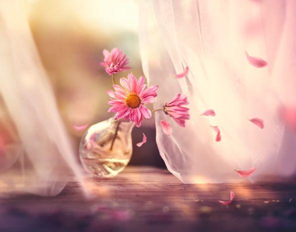 Ashraful Arefin 500px instagram arte fotografia surreal flores estações cores luzes
