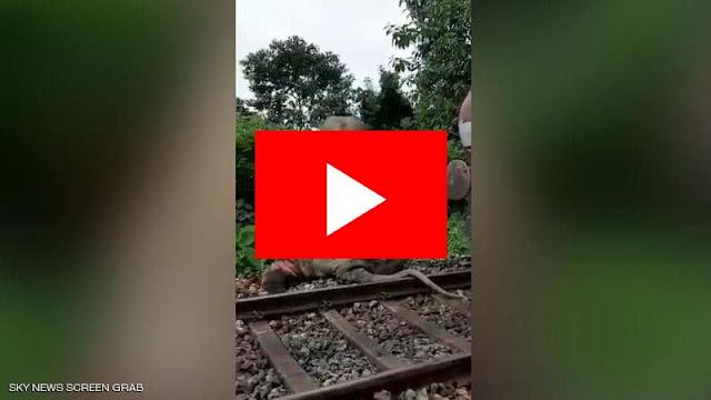 فيديو لصدام القطار والفيل.. الحيوان قتل وهذا ما حدث للجرار