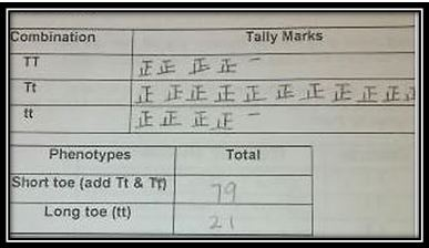 go figure tally marks different ways to make them