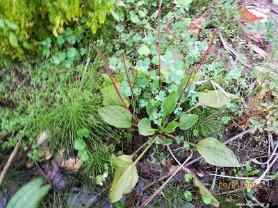 φυτά που βρίσκουμε νερό