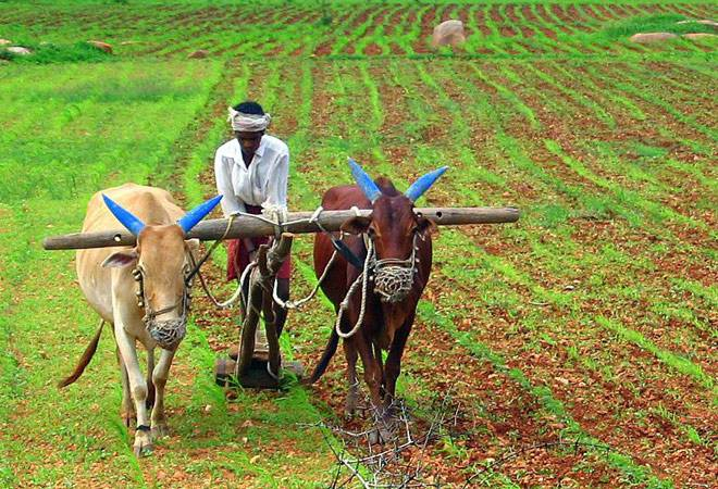 पीक विम्यासंदर्भात राज्य सरकार चा मोठा निर्णय : Pik Vima News