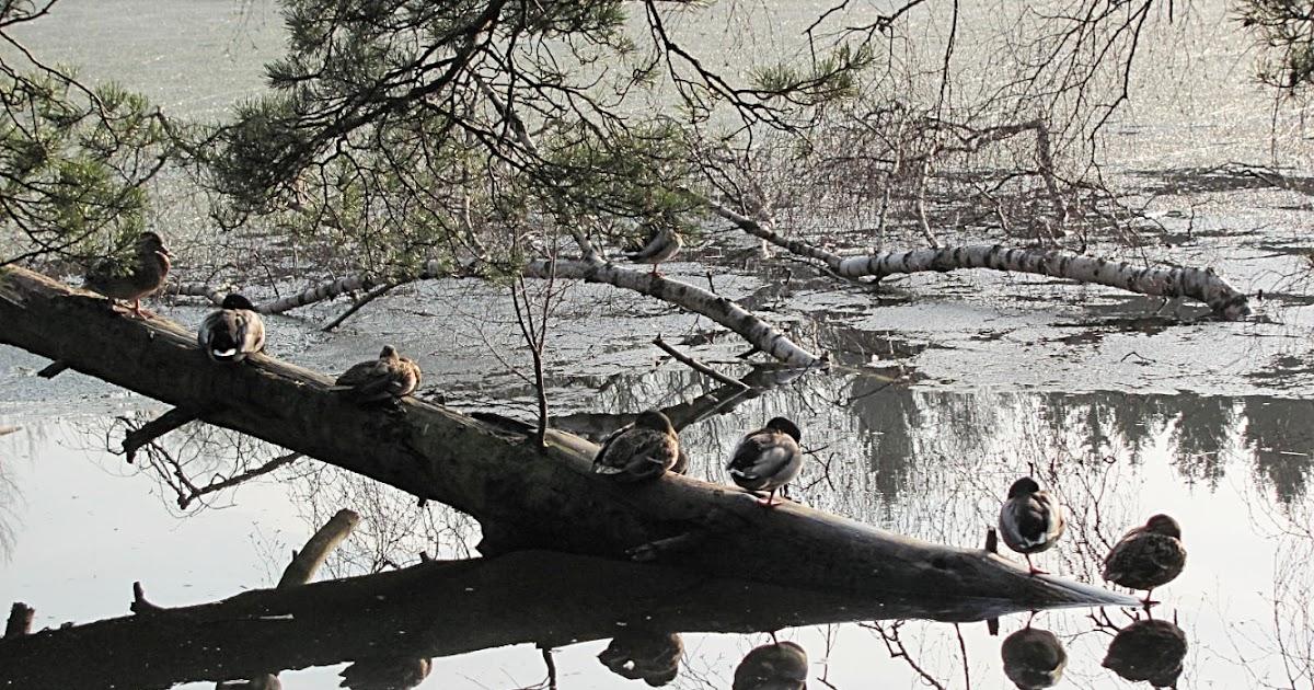 Inspirations From The Bear Lake In Stuttgart
