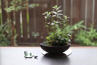 舟形の鉢に入ったヤクシマワレモコウとヒトツバショウマの咲いた山野草盆栽とカエルの置物