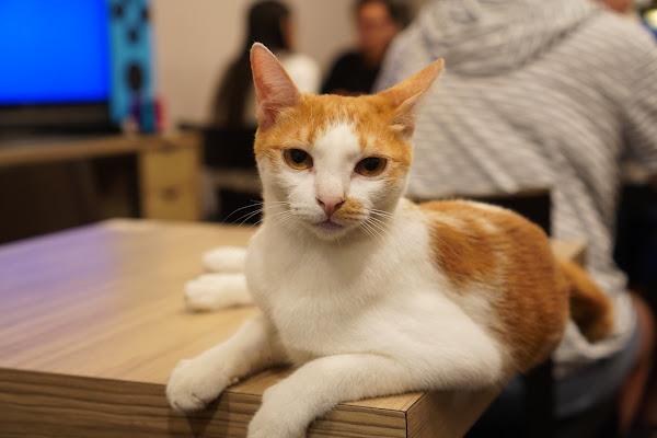 台南永康區美食【魔法咪嚕寵物主題餐廳】環境介紹、台南寵物友善餐廳