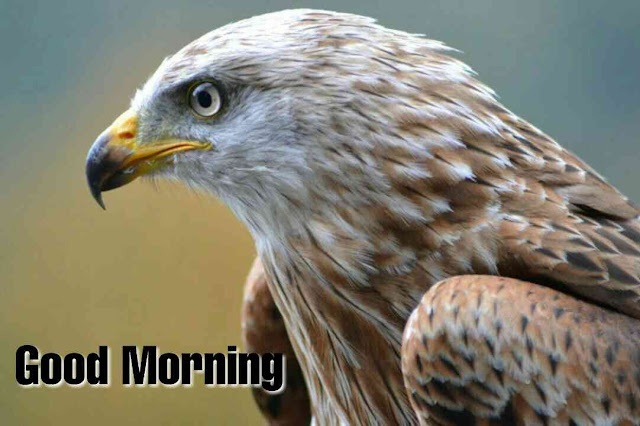 Beautiful birds good morning image Hawk