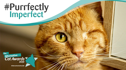 one-eyed ginger cat with #Purrfectly Imperfect and the Alternative Cat Awards logos