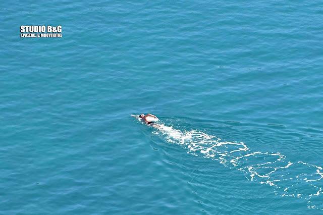 Δεν το βάζουν κάτω οι τολμηροί κολυμβητές του Ναυπλίου