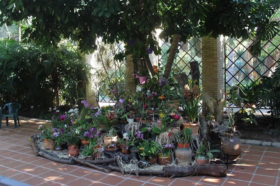 exposición orquídeas