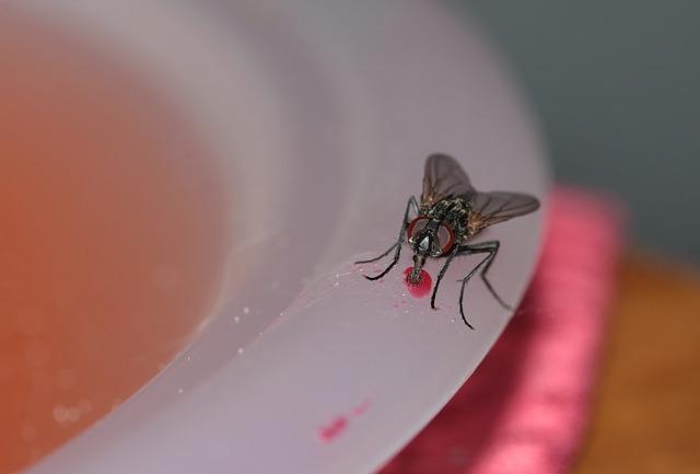 10 Cara Mengusir Lalat Dengan Bahan Alami Yang Terbukti Ampuh