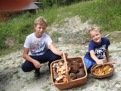 grzyby 2018, grzyby w lipcu, grzyby na Orawie, borowiki, naziemki, spotkanie z padalcem, pełny koszyk