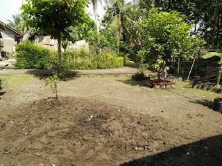 Tanah Dijual Cepat Wates Kulonprogo Yogyakarta Bonus Bangunan