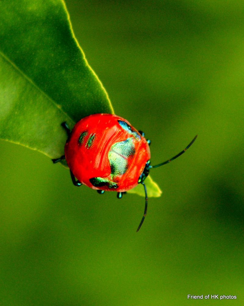 Photographic Wildlife Stories In UK/Hong Kong: Colourful Bugs