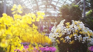 Orchid Extravaganza en Longwood Gardens
