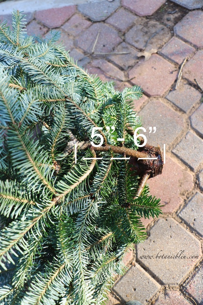 "A tree slice for a wreath should be a section of the trunk about 5"" to 6"" long"