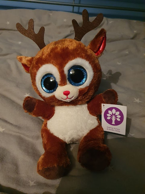 A reindeer plush teddy gifted from Santa at Oaktree Garden Centre.