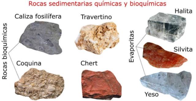 Las rocas sedimentarias químicas son todas aquellas formadas por la acción química directa de partículas iónicas y coloidales disueltas en soluciones acuosas salinas concentradas. Las rocas sedimentarias bioquímicas son aquellas que se forman por la acumulación y litificación del material sólido que han generado organismos vivos en diferentes ambientes geológicos.