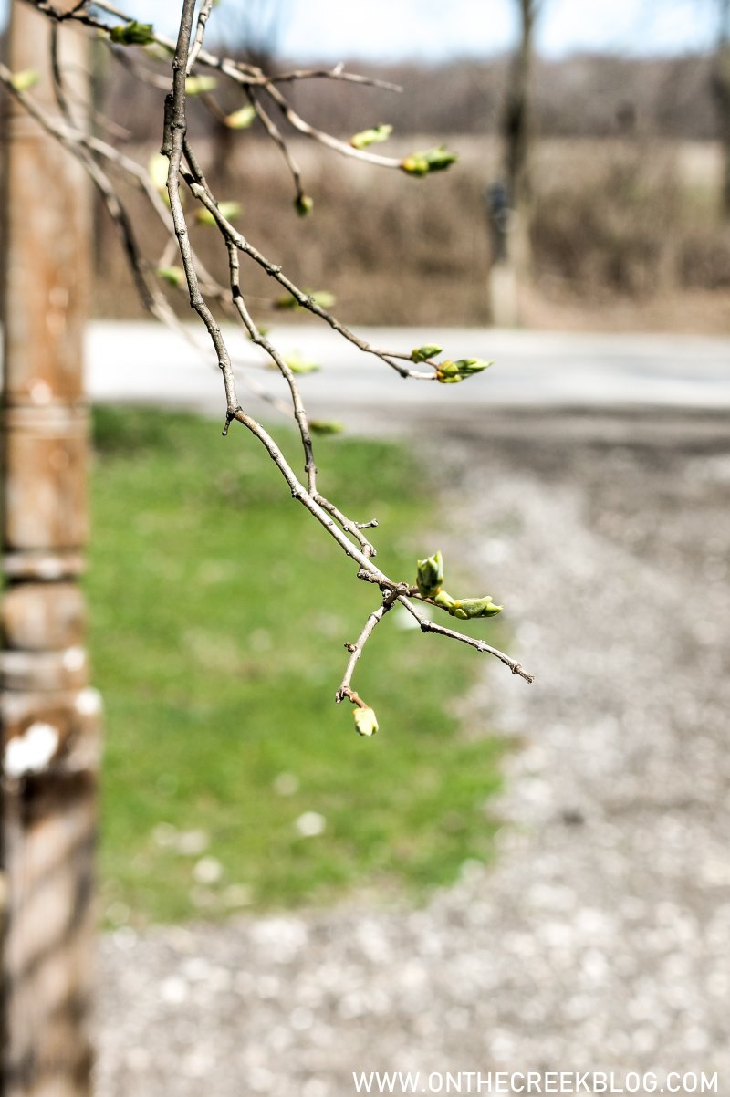 early spring lilac blooms // My blogging journey & what's next | On The Creek Blog
