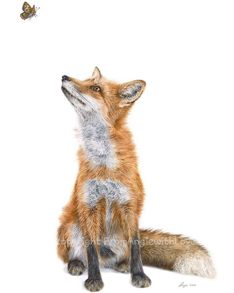 03-Fox-Angie-A-Pet-and-Wildlife-Pencil-Drawing-Artist-www-designstack-co