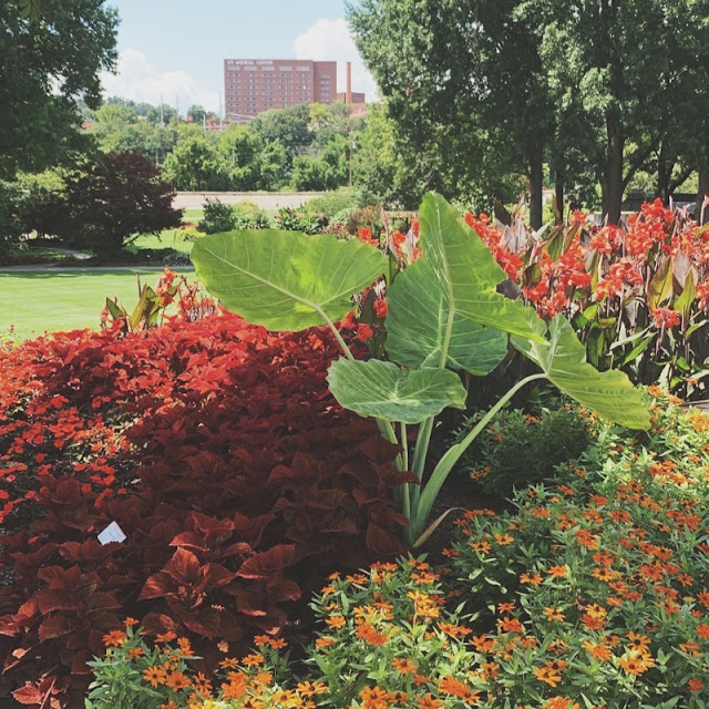 UT gardens - knoxville, tennessee