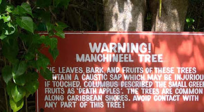 about Manchineel tree