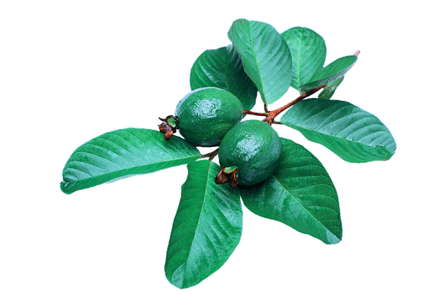 Beauty Secrets of Guava Leaves