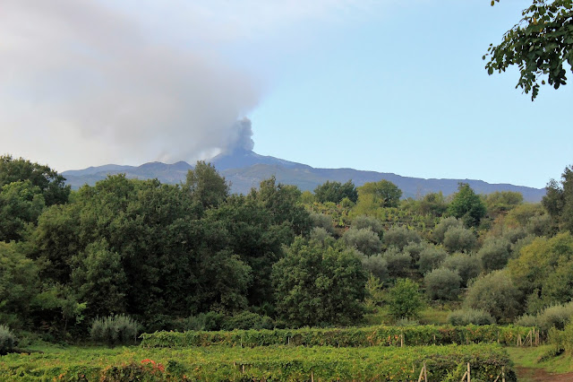 Volcanic wines of Mt. Etna