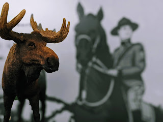 Moose In Front Of Mountie