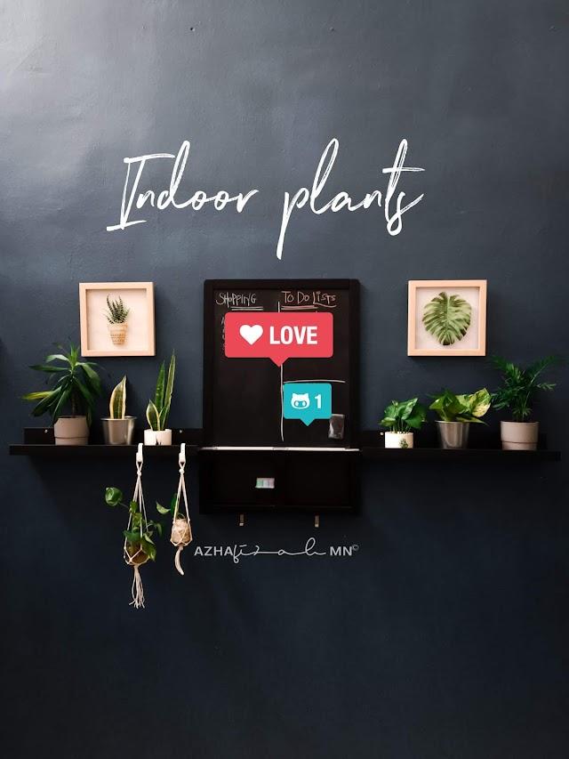 Deko-Deko Indoor Plants