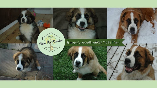 Paws For Reaction National Specially-abled Pets Day Saint Bernese