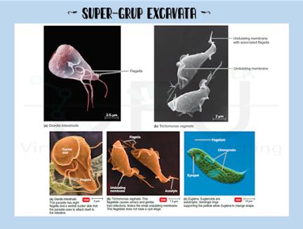 Excavata - Taksonomi Protista
