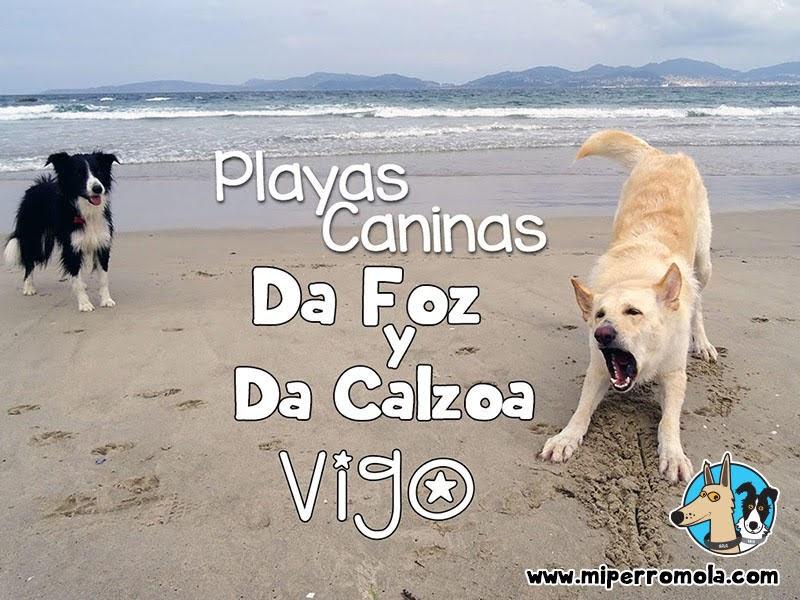 Can de Palleiro y Border Collie en las Playas Caninas de Vigo Praia Da Foz y Praia Da Calzoa