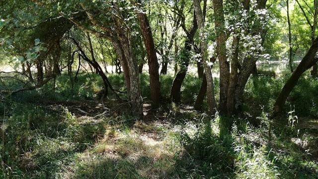Zonas verdejantes com sombra para campismo