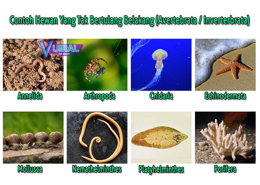 ciri ciri invertebrata platyhelminthes