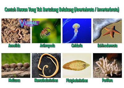 Pengertian, Ciri Ciri, Klasifikasi Dan Contoh Hewan Avertebrata/Invertebrata Beserta Keterangannya