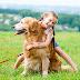 Best 5 DOG BREEDS FOR KIDS