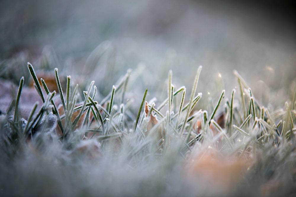 luonto, nature, outdoorphotography, suomi, finland, winter, fall, frost, Visualaddict, Frida Steiner, valokuvaaja, Kirkkonummi, maisema, kuura, huurre, nurmikko