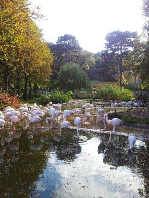 10 of the World's Most Famous Zoos - Tiergarten Schönbrunn, Austria
