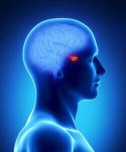 hipofiz bezi prolaktin