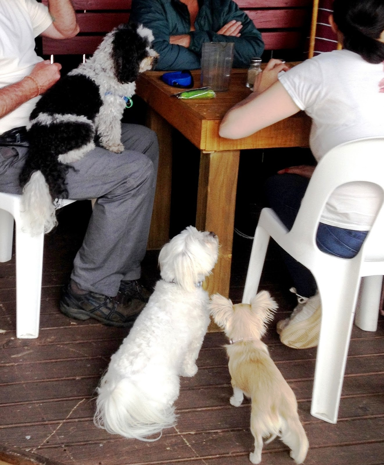 Small Dog Socials: Dog-Friendly Cafes