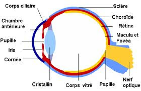 Anatomie de l 39 oeil pdf sant - Chambre implantable definition ...